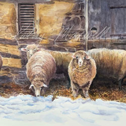Snowed In Sheep