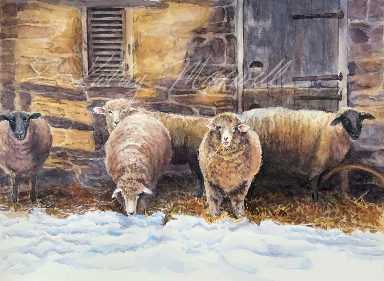 Snowed In Sheep