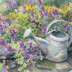 Watering the Catmint